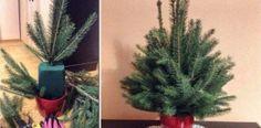 Rýchly a jednoduchy návod na stromček z vetvičiek, ktorý zvládne každý