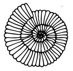 ammonite (disegno di: LIM- Laboratorio Interattivo Manuale e Archeoplanet)