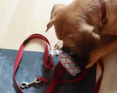 Dog Waste Bag Holder (With Hidden Treat Pocket) Easy Sewing Projects, Sewing Tutorials, Diy Projects, Bag Tutorials, Diy Dog Bag, Up Dog, Cat Bag, Dog Coats, Diy Stuffed Animals
