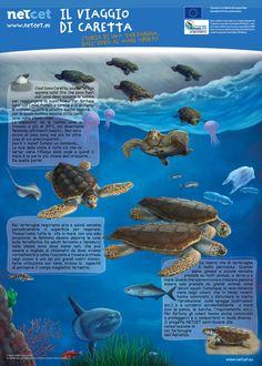 Ti raccontiamo il viaggio di Caretta insieme a Netcet ...  Se vuoi conoscere meglio le tartarughe marine: http://www.wwf.it/tartarugamarina/