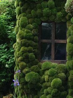 Casa coberta com musgo.