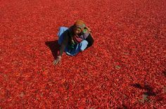 India, chilli peppers