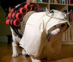 Chân dung của ông Trùm khủng bố, đang truy nã. Mn trong thành phố ai bắt được sẽ đc thưởng nóng 10kg cá khô😎