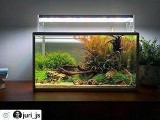 Acuario3web (@acuario3web) | Twitter Planted Aquarium, Betta Aquarium, Nano Aquarium, Nature Aquarium, Aquarium Design, Fish Aquarium Decorations, Nano Cube, Amazing Aquariums, Floating Plants