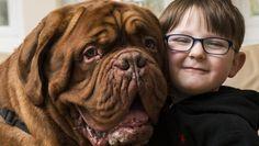 Il cane gigante che ha notato il male di un bambino prima degli altri