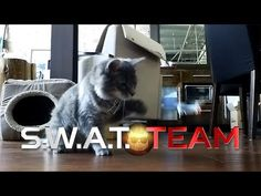 S.W.A.T. Team: Cat Edition! / #Funny #pet #videos from @PawPail