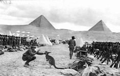 Australian troops at Mena Camp, Egypt, December looking towards the Pyramids. Many Australian units brought kangaroos and other Australian animals with them to Egypt, and some were given to the Cairo Zoological Gardens when the units went to Gallipoli. Rare Historical Photos, Historical Landmarks, Anzac Soldiers, Pyramids Egypt, Anzac Day, Australian Animals, World War One, Giza, Military History