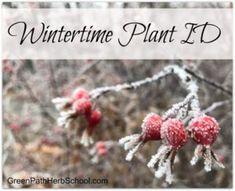 Wintertime Plant ID : Green Path Herb School Edible Wild Plants, Medicinal Plants, Winter Time, Four Seasons, Paths, Herbs, School, Green, Seasons Of The Year