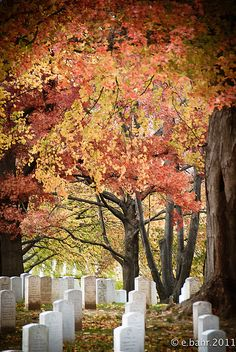 Arlington Cemetery.  I always take a little walk into Arlington when I'm in DC. So beautiful.