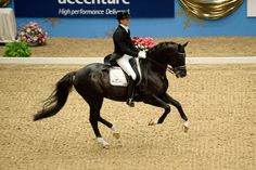the amazing Edward Gal #dressage