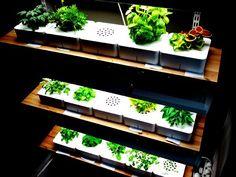 ¡Plantas inteligentes en tu cocina! Aportan un toque de naturalidad, frescura y color que hacen que tu cocina se convierta en lugar especial.
