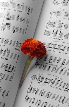 Music and red Carnation