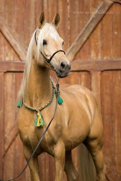 Beautiful Palomino colored horse with pretty decorative collar, breast cover, teal and yellow tassels, pretty horse photography. Horses And Dogs, Cute Horses, Pretty Horses, Horse Love, Wild Horses, Black Horses, Horse Photos, Horse Pictures, Palamino Horse