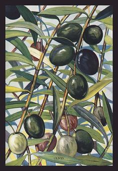 Unknown (American Food Encyclopedia) Olives 1923 - still life quick heart Botanical Art, Botanical Illustration, Illustration Art, Illustrations, Painting Prints, Watercolor Paintings, Art Prints, Acrylic Paintings, Tree Wall Art