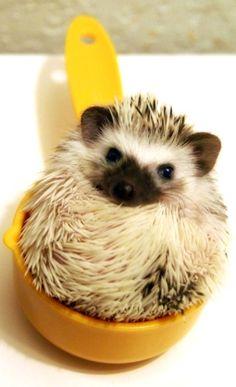 Might I borrow a cup of hedgehog, kind sir? #squishable #plush #hedgehog