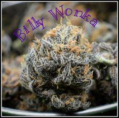 Billy Wonka - Madd Farmer Willy Wonka, Chocolate Factory, Magick, Farmer, Herbs, Herb, Witchcraft