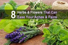 8 Herbs and Flowers That Can Ease Your Aches and Pains. Nature has provided everything we need to survive, including medicinal plants that ease aches and pains, relieve migraines, clear up rashes, reduce swelling and bruising, and treat various illnesses.