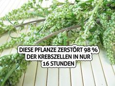 Extrakte der Heilmittelpflanze einjähriger Beifuß – Artemisia annua L. Health Articles, Health Tips, How To Stay Healthy, Healthy Life, Belleza Diy, Cancer Cure, Cancer Cells, Herbal Medicine, Good To Know