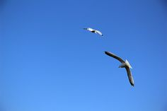 Two seagulls flying against a clear blue sky