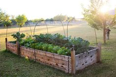 Love this raised bed out in the middle of nowhere.
