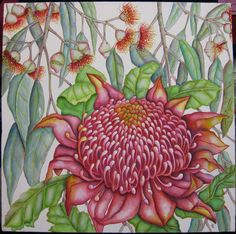 Magenta Waratah  Painted by Ellie Logan  Design by Chris Roy