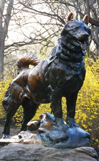 Balto Statue in Central Park--Back in 1925 Nome, Alaska was stricken with a horrific diphtheria outbreak. Not enough antitoxin was available to treat all the sick until teams of mushers and sled dogs battled a blinding blizzard and traveled 674 miles to deliver the medicine.