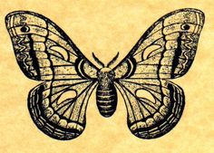 Cecropia Moth Rubber Stamp by ButterSideDownStamps on Etsy, $7.95