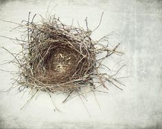 A birds nest I found in a vine in front of my house. The birds had long moved out when we were taking down the vine it was made in