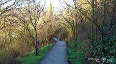 Caminos verdes.