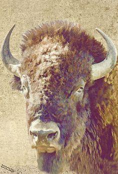 North American Bison Portrait