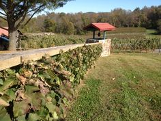 Definitely planting and growing a grapevine fence like this. Planting, Gardening, Backyard Patio, Patio Ideas, Grape Vines, Fence, Vineyard, Projects, House