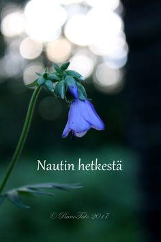 voimakortti Nautin hetkestä