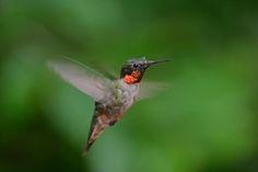 Southern Indiana Nature Photographer--Steve Glaser Photo Keywords ...