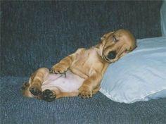 Cachorrinhos com preguiça são flagrados e aparecem em fotos fofas - Animais