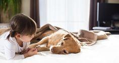 Saiba tudo sobre esta doença que pode acometer o seu cachorro. E lembre-se que a prevenção é o melhor remédio! #cachorros #dogs #cães #pets #animais #saudeanimal