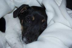 http://www.hondenpage.com/fotos/foto/188716/even-lief-lachen-naar-mijn-baasje,-dan-krijg-ik-zeker-weten-een-knuffel!.php