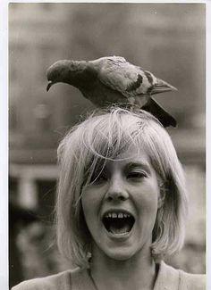 Pigeon home!