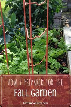 By late summer, our edible gardens can look a little-shall we say-untidy. Before planting a fall garden, you'll have to tidy up the summer garden to make room. Here's how I prepare my beds for a fall garden.