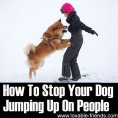 Your dog might just be excited and being a little too friendly - but if he/she jumps up on people and cannot be controlled, it can be a nuisance or possibly even a problem. Some people might just not like having the dog jump up or may even be afraid.