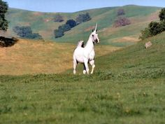 I think this unicorn will have fun in this area