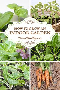 "How to Grow an Indoor Garden | Grow a Good Life: ""The last few years, I have experimented with growing greens indoors in the winter using my DIY Grow Light System in the cool basement. This year, I am starting some seeds early so we can enjoy fresh harvests for salads, stir-frys, or soups even if a Nor'easter rages outside."" 
