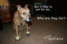 Announcement idea with dog... Perfect for jasper lol