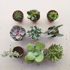 Flourish photo by melissa green nature is pretty суккуленты, Cacti And Succulents, Planting Succulents, Planting Flowers, Garden Cactus, Garden Plants, Air Plants, Indoor Plants, Cactus E Suculentas, Plants Are Friends