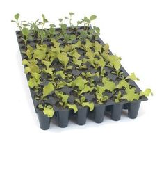 Seed Germinating Kit with 72 Cell Plug Flats (15 Piece Kit) by David's Garden Seeds by David's Garden Seeds. $69.95. Helps seedlings grow stronger and healthier. Gets your seeds off to a great start. Helps maintian heat for germination. Satisfaction is guaranteed. Free seeds included. Kit Includes: 5 each leak proof trays, 5 each plug flats with 72 cells, 5 each humidity domes.  Assortment of free sweet pepper, lettuce, tomato and cucumber seeds.