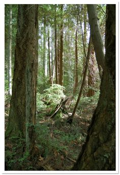 The Grand Forest, Bainbridge Island, WA by Uncle Beefy