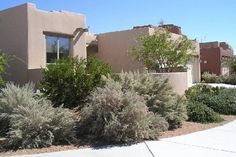 Abq West Mesa residence - front to S, Sand Sage, Creosote Bush (QUERCUS, 1998)