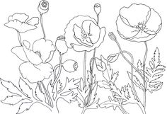 Beautiful Flowers For Remembrance Day Coloring For Kids - Remembrance day Coloring Pages : KidsDrawing – Free Coloring Pages Online
