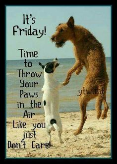 Its friday throw your paws up friday happy friday tgif good morning friday quotes good morning quotes friday quote funny friday quotes quotes about friday Friday Quotes Humor, Happy Friday Quotes, Guy Quotes, Humor Quotes, Friday Funnies, Funny Friday Memes, Daily Quotes, Tgif, Funny Good Morning Messages