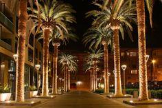 SAN JOSE // San Jose's 10 Best Local Restaurants: Dining in Silicon Valley // http://theculturetrip.com/north-america/usa/california/articles/san-jose-s-10-best-local-restaurants-dining-in-silicon-valley/