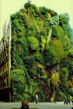 Image du jour - Jardin vertical sur le mur du musée Caixa Forum à Madrid, Espagne. (Le Monde)